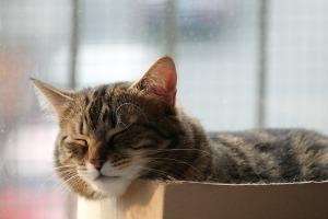 cat-488612_1920